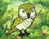 Desenho Kakapo pintado por dudacolor