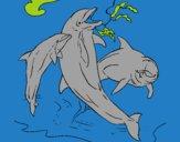 Golfinhos a brincar