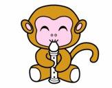 Macaco flautista