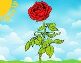 Desenho Uma rosa pintado por rian123