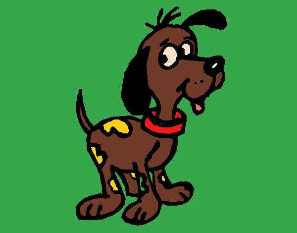 Cão atento