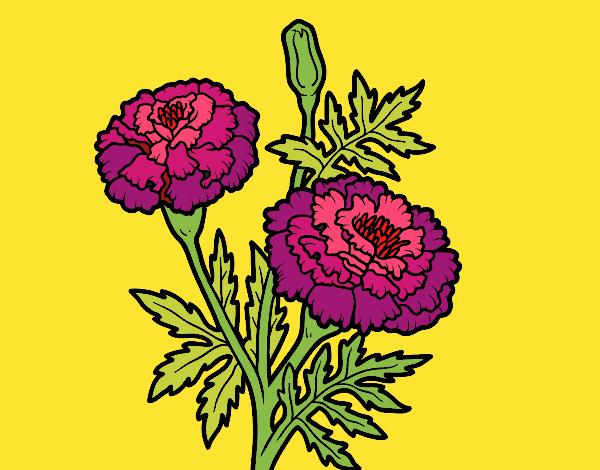 Desenho Flor da maravilha pintado por nicknice