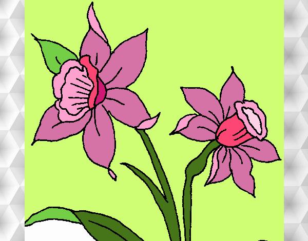 Desenho Orquídea pintado por nicknice