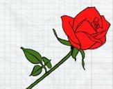 Desenho Rosa pintado por yuuni