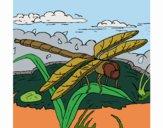 Desenho Libélula pintado por Craudia