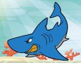 Tubarão furioso