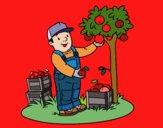 Um fazendeiro