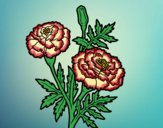 Desenho Flor da maravilha pintado por Craudia