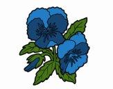 Desenho Flores de amor-perfeito pintado por Jujuli