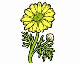 Desenho Margarida selvagem pintado por Jujuli
