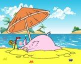 Porco na praia