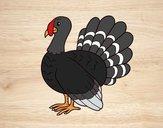 Desenho Turquia comum pintado por Keithy