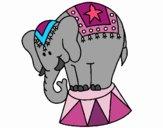 Elefante a actuar