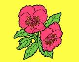 Desenho Flores de amor-perfeito pintado por teresasara