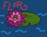 Uma flor de lotus