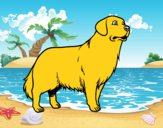 Cão Golden retriever