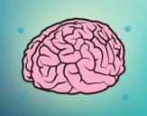 Cérebro