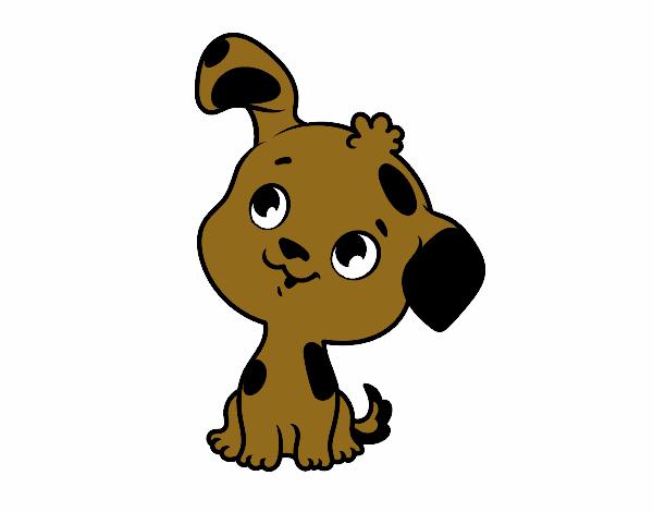 cachorro pupe