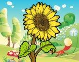 Flor de girassol