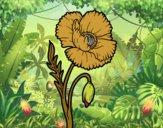 Uma flor de papoula