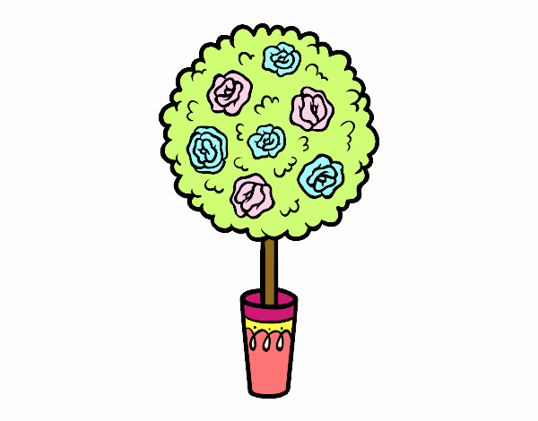 Arbusto