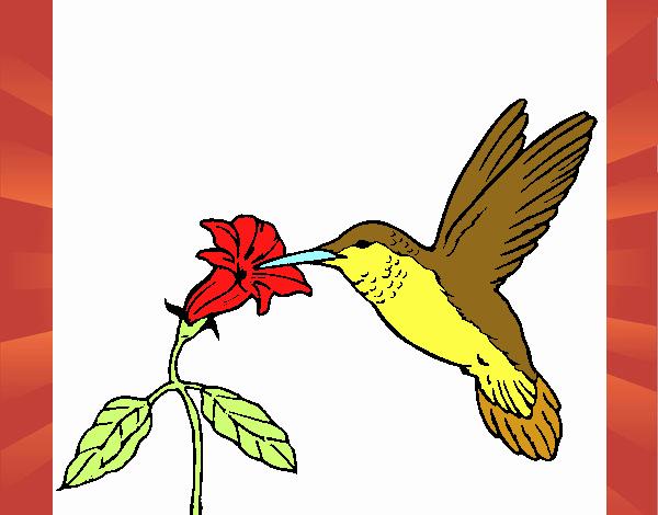Desenho de Colibri e uma flor pintado e colorido por Usuário não ...