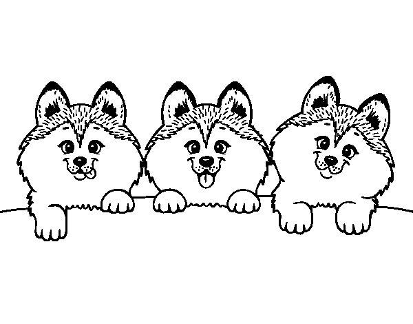 Desenho de 3 filhotes de cachorro para Colorir