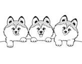 Desenho de 3 filhotes de cachorro para colorear