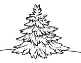 Desenho de Abeto-branco para colorear