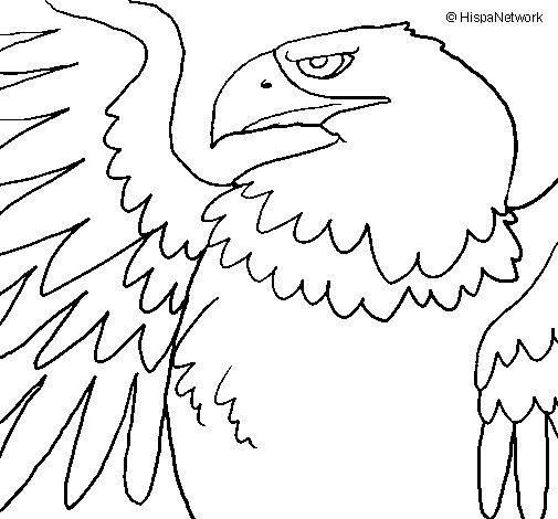 Desenho de Águia Imperial Romana para Colorir