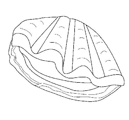 Desenho de Amêijoa para Colorir