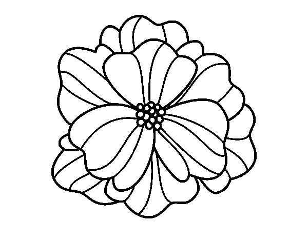 Desenho De Amor-perfeito Para Colorir