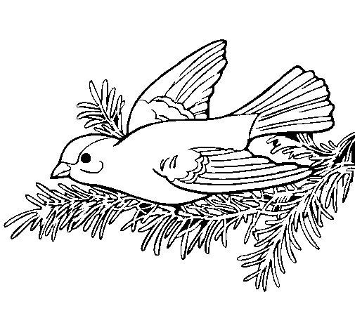 Desenho de Andorinha para Colorir