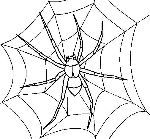 Desenho de Aranha para Colorir