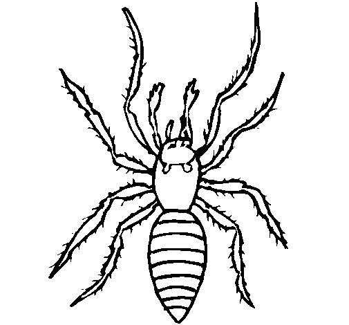Desenho de Aranha tigre para Colorir