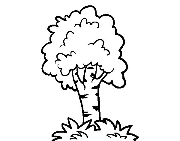 Desenho De Árvore 7 Para Colorir