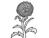 Desenho de Aster para colorear