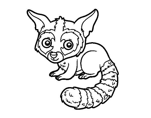 Desenho de Bassariscus para Colorir