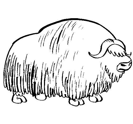 Desenho de Bisonte  para Colorir