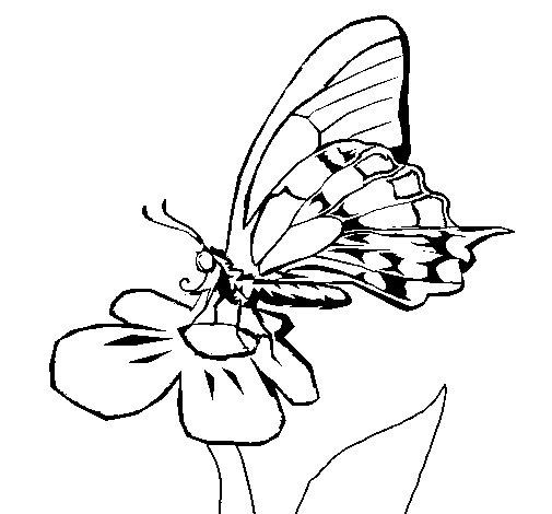Desenho de Borboleta em flor para Colorir