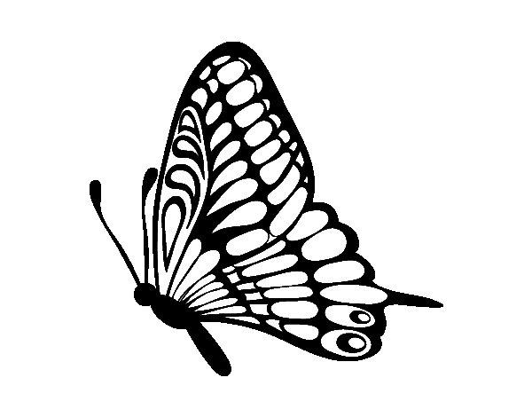 Desenho de Borboleta esquerda para Colorir
