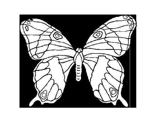 Desenho de Borboleta silvestre para Colorir