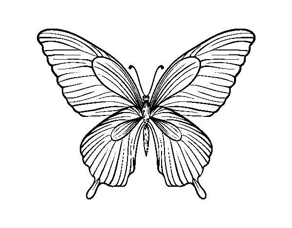 Desenho de Borboleta tropical para Colorir