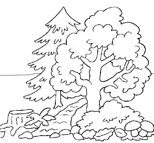 Desenho de Bosque para Colorir