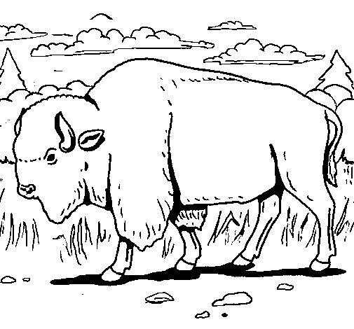 Desenho de Búfalo para Colorir