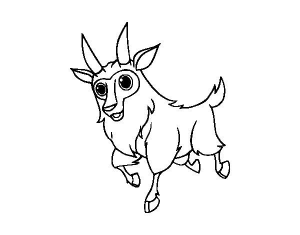 Desenho de Cabra macho para Colorir