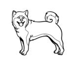 Desenho de Cão Akita Inu para colorear