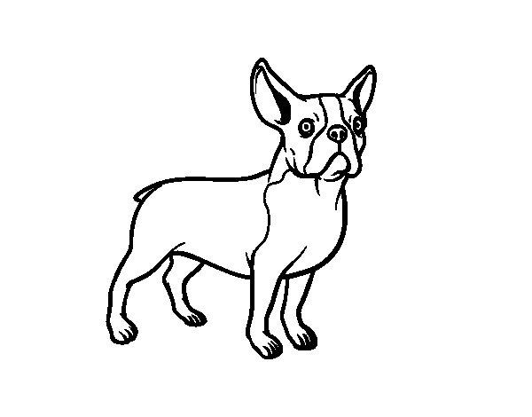 Desenho de Cão Buldogue francês para Colorir