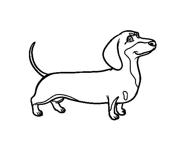 Desenho de Cão dachshund para Colorir