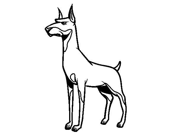Desenho de Cão Dobermann para Colorir